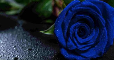 6 Beautiful Blue Flowers And Their Sweet Meanings