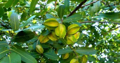Arjunarishta Benefits, Uses, Dosage & Side Effects