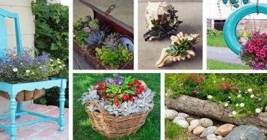 Ways to Brighten Your Home with Indoor Plants