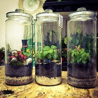 Things you might require for terrarium team structure